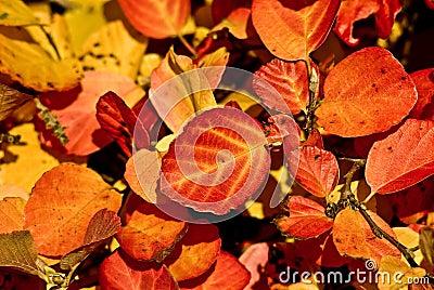 Coloured leafs