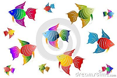 Colourful Angel Fish