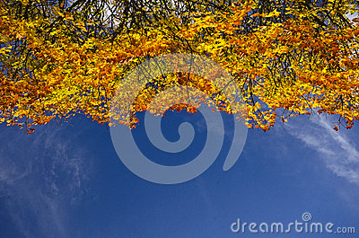 Colourful autumn tree-top against a blue sky