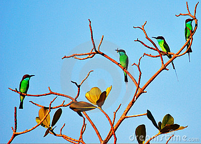 Colourful birds on tree branch