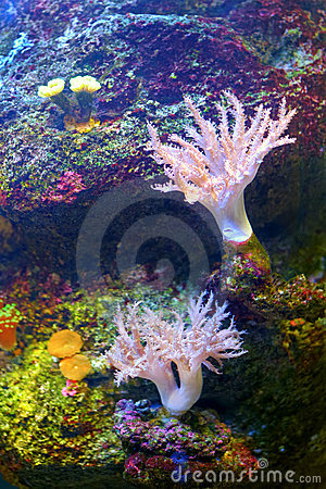 Free Colourful Coral Reef Stock Photo - 22907460