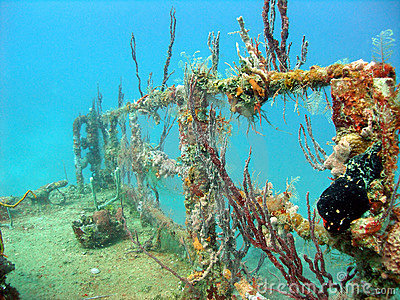 Colourful corals inhabiting a wreck