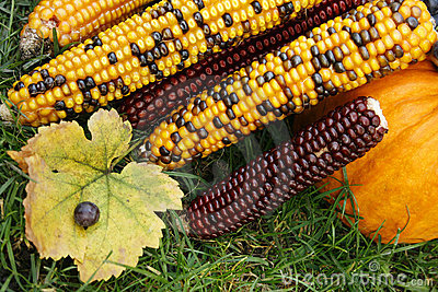 Colourful corn and pumpkin