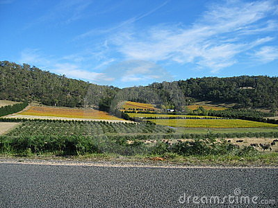 Colourful fields in Tasmania