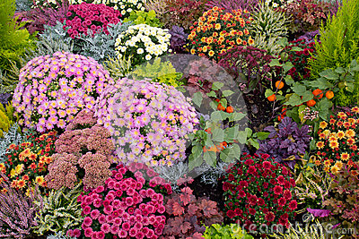 Colourful flowerbed