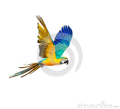 Free Colourful Flying Parrot Stock Photos - 46753653