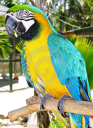 The Colourful Parrot