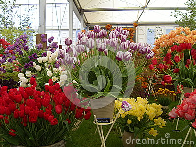 Colourful Tulip Flower Display