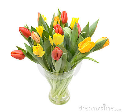 Free Colourful Tulips Royalty Free Stock Photos - 1879858