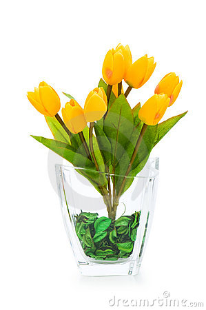 Colourful tulips isolated