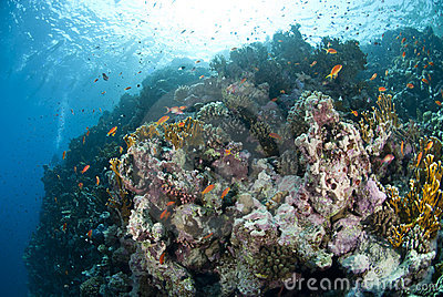 Colourful underwater tropical coral reef scene.