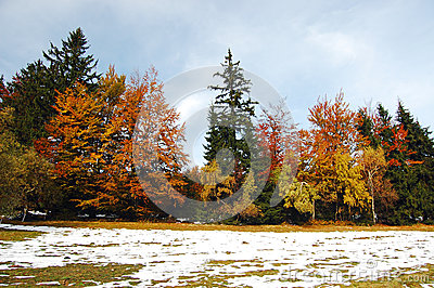 Colourfulautumn with snow