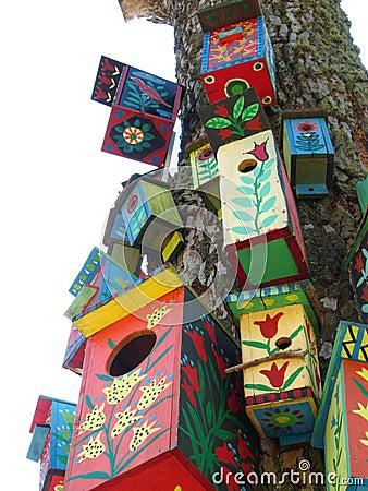 Colours bird boxes