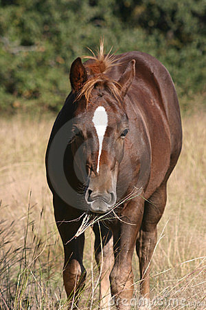 Free Colt Chewing Grass Stock Photos - 1430613