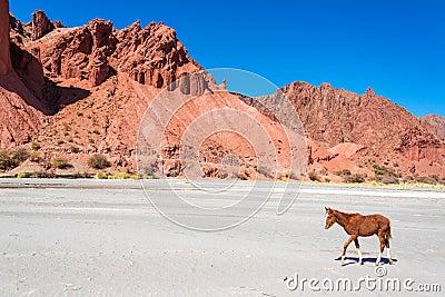Colt in a Dry Desert