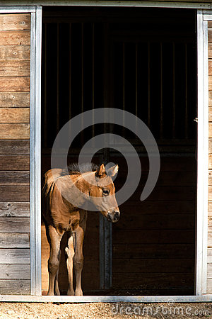 Free Colt Waits By The Door. Stock Photo - 40709400