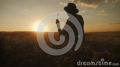 Coltivatore felice di silhouette in un campo di frumento al tramonto Concetto Di Successo Agribusiness archivi video