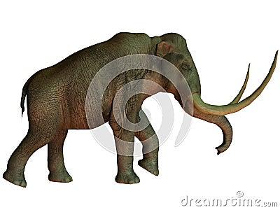 Columbian mamut na bielu