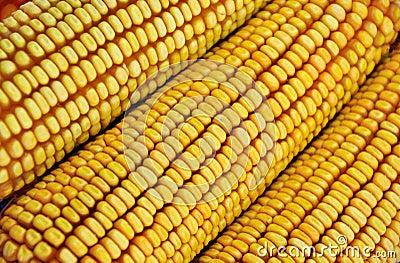 Column of raw corn cob