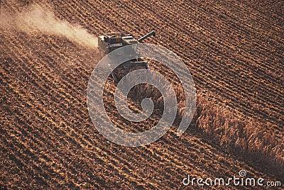 Combine in cornfield