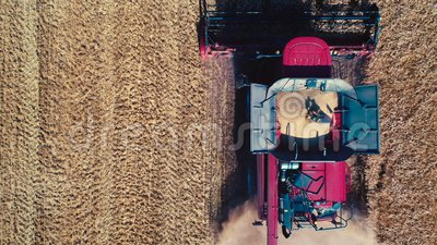 Combine harvester in action on wheat field, unloading grains, aerial drone view.  stock footage