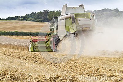 Combine harvester cutting cereal