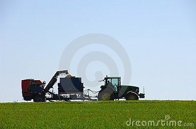 Combine harvesting carrots in green field Editorial Photo