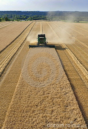 Free Combine Harvesting Wheat Royalty Free Stock Image - 10646876