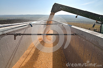 Combine unload the crop