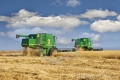 Combine on wheat field