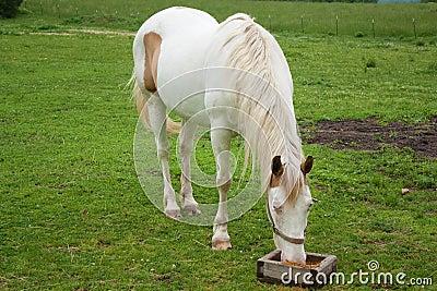 cavalo fotografia de malayali auntiesmallu mula zoofiliavideos daily