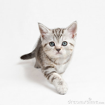 Free Coming Kitten Stock Photo - 10684580
