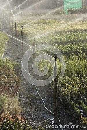 Commercial sprinklers