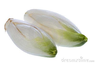 Common chicory flower buds