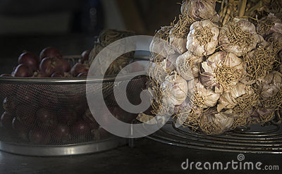 Common Garlic, Allium ,Garlic, onions Stock Photo