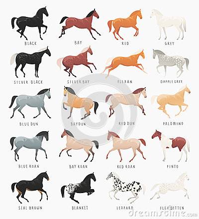 Free Common Horse Coat Colors Royalty Free Stock Photo - 69266995