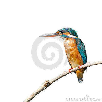 Free Common Kingfisher Stock Photos - 34946753