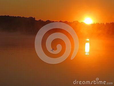 Common Loon with Sunrise