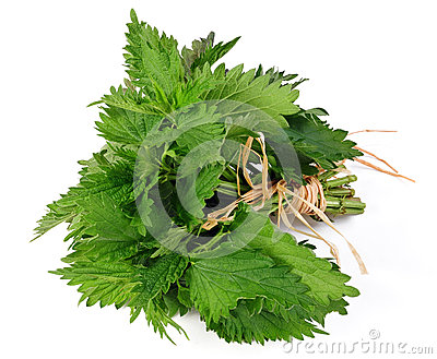 Common nettle Stock Photo