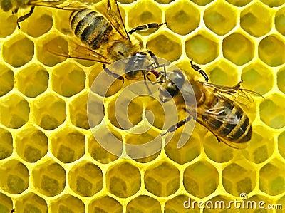 Community bees