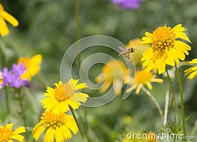 Commuting Bee