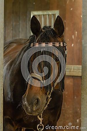 Companion Animals - Horses