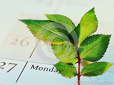 Company s green agenda (CSR)