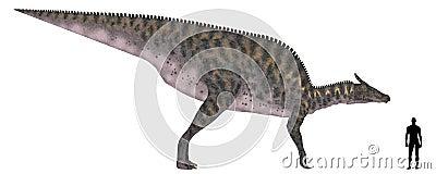 Comparação do tamanho de Saurolophus