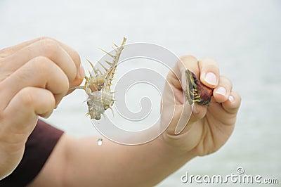 Compare hermit crab
