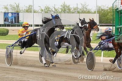 Competência do italiano do cavalo Foto Editorial