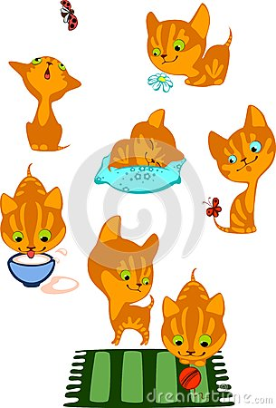 The complete red kittens