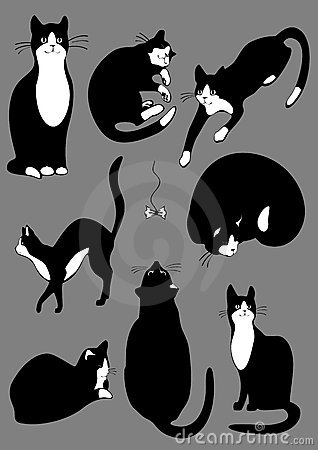 Complete set of cats.jpg