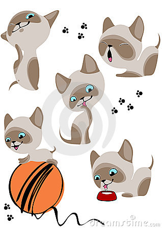The complete set of cheerful Siamese kittens