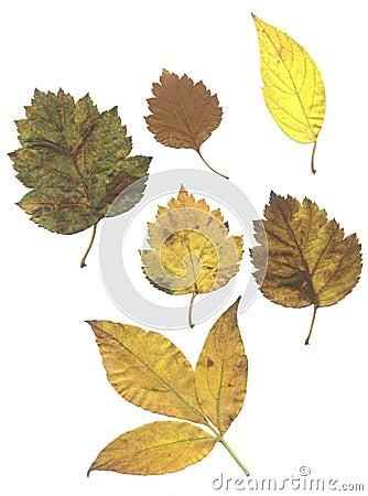 Composite of autumn leaves